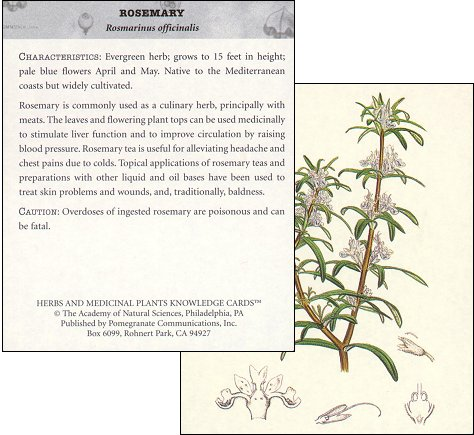 Herbal-knowledge-cards